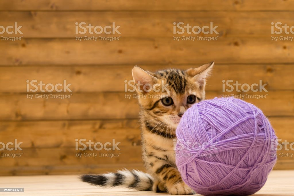 A kitten plays with a large tangle of threads, on a wooden floor stock photo