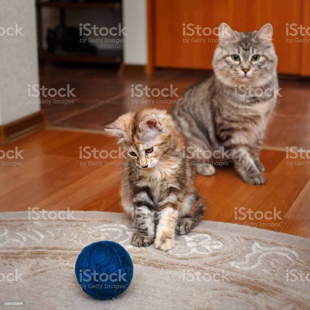 Kitten plays with ball of yarn. stock photo
