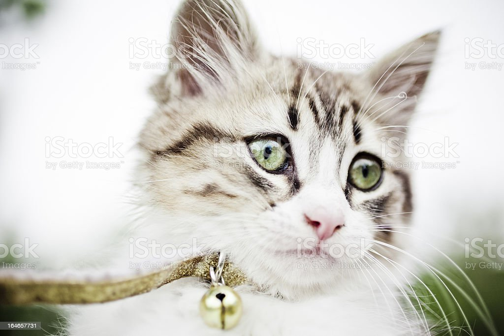 Kitten Portrait. Copy space stock photo