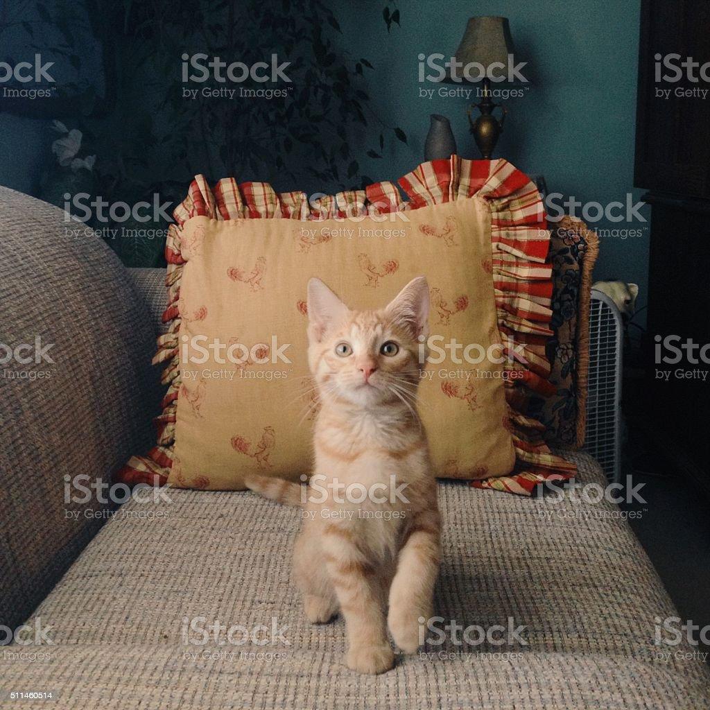 Kitten Poses royalty-free stock photo