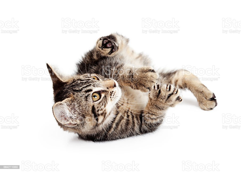 Kitten Rolling On Back To Play stock photo