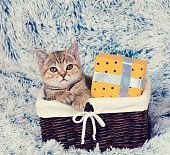 kitten sitting in a basket with present box