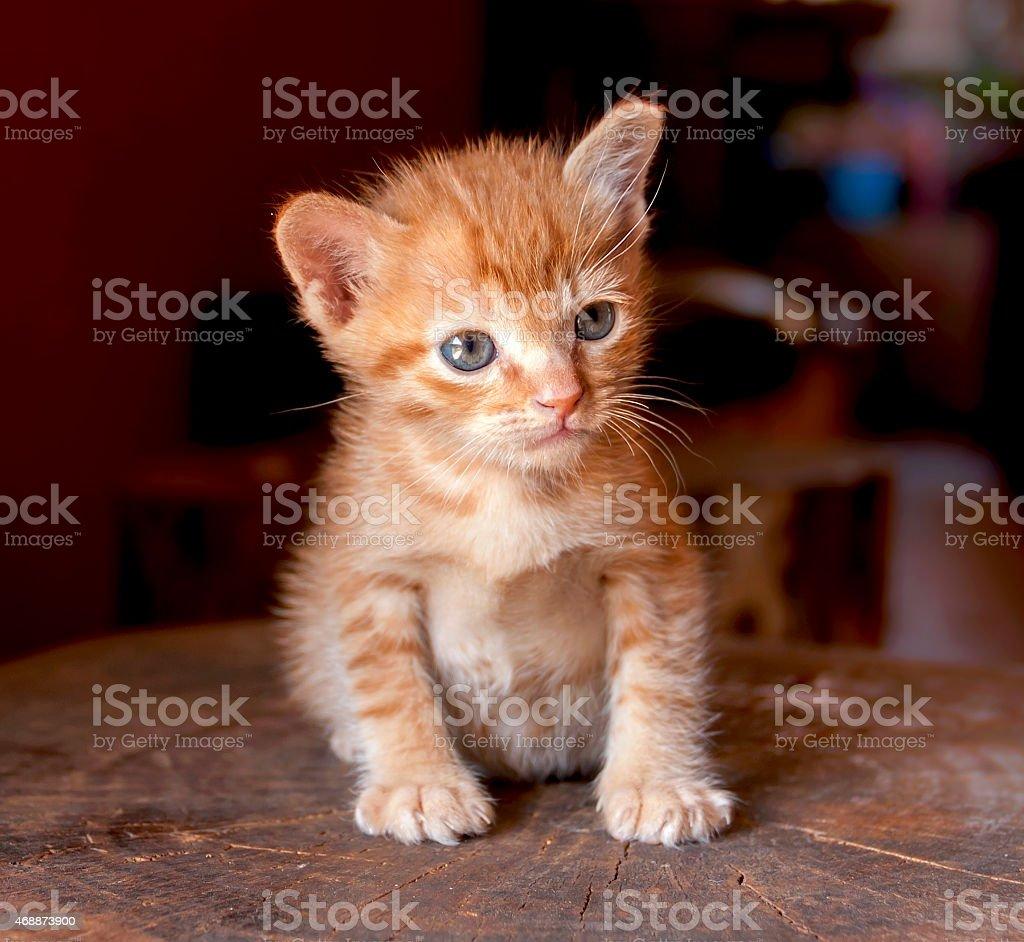 Kitten sitting on the log royalty-free stock photo
