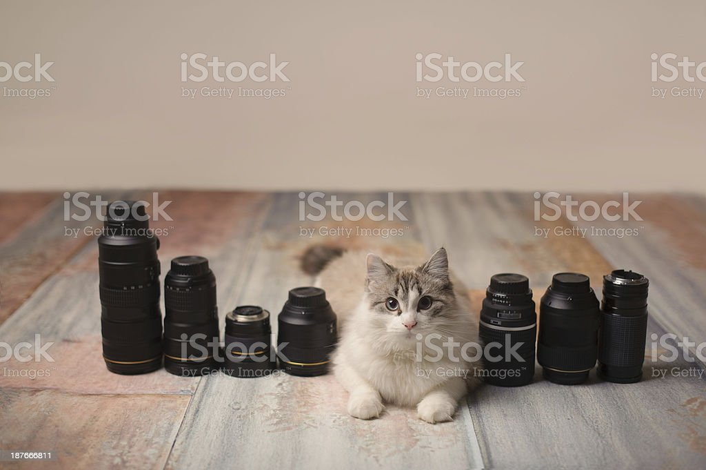 Kitten Sitting with Camera Lenses royalty-free stock photo