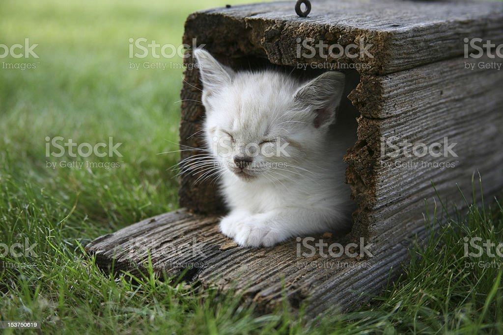 Kitten Sleeping in Birdhouse royalty-free stock photo