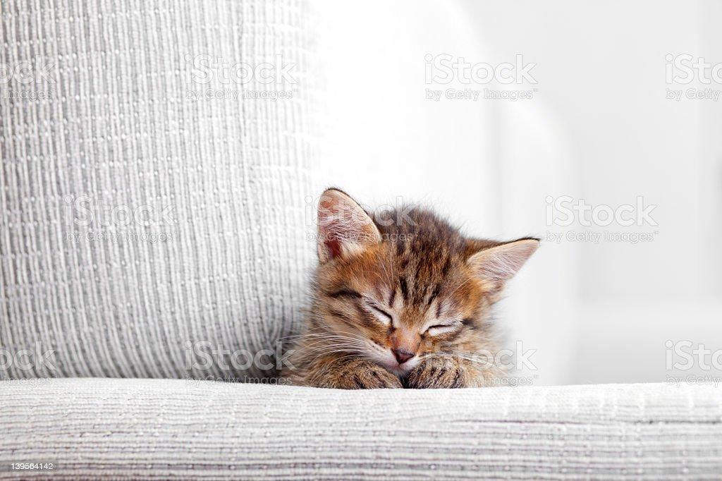 Kitten sleeping on a gray couch stock photo