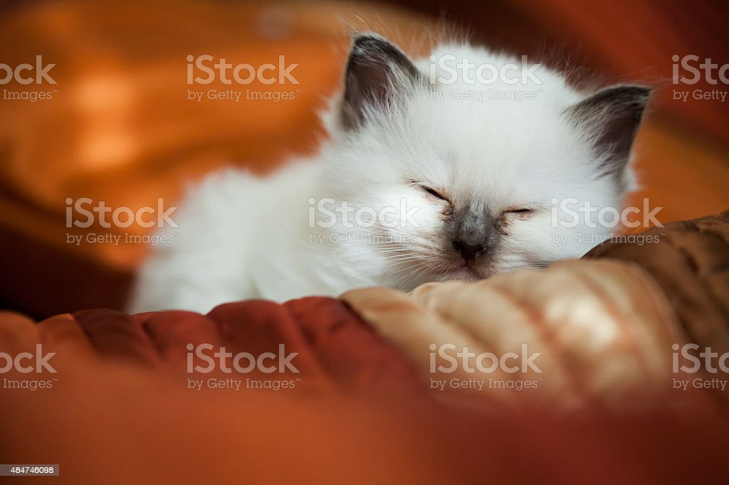 Kitten sleeping on bed stock photo