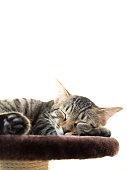 Kitten to take a nap