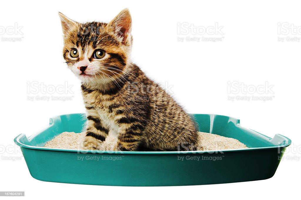 kitten toilet stock photo