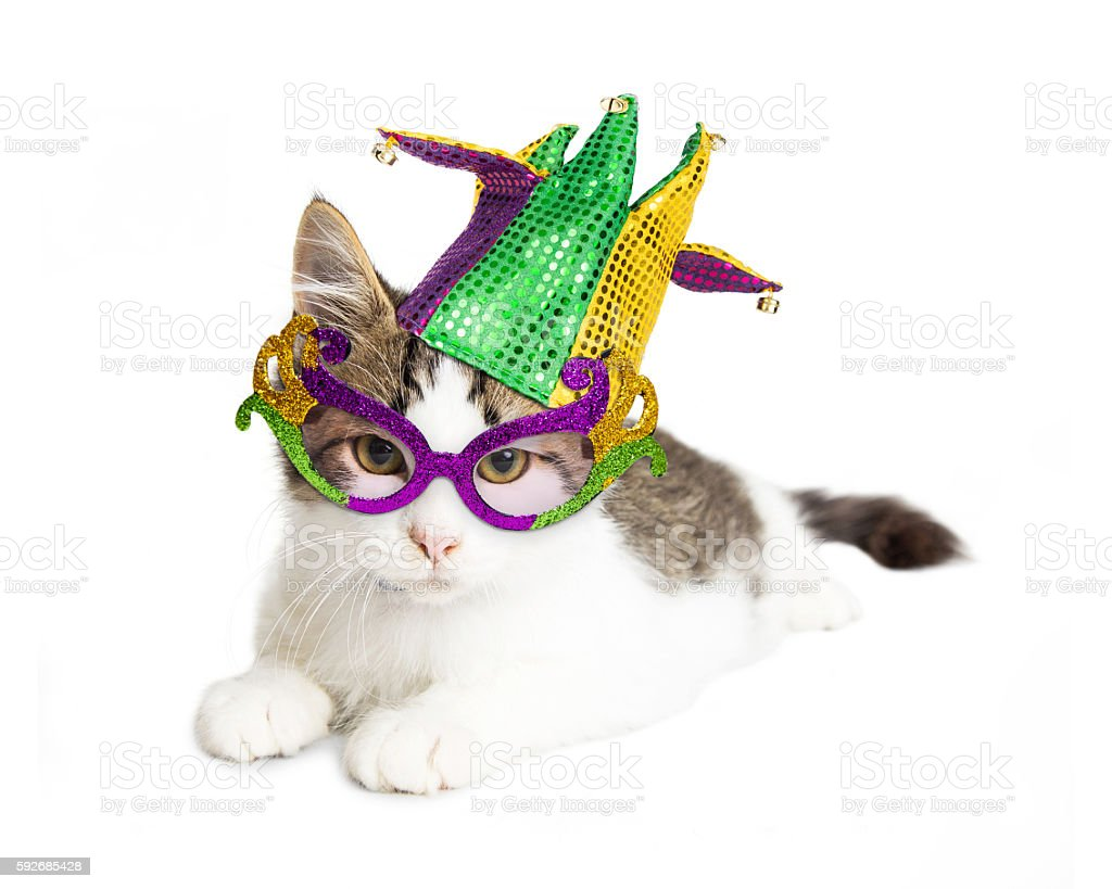 Kitten Wearing Mardi Gras Hat and Glasses stock photo
