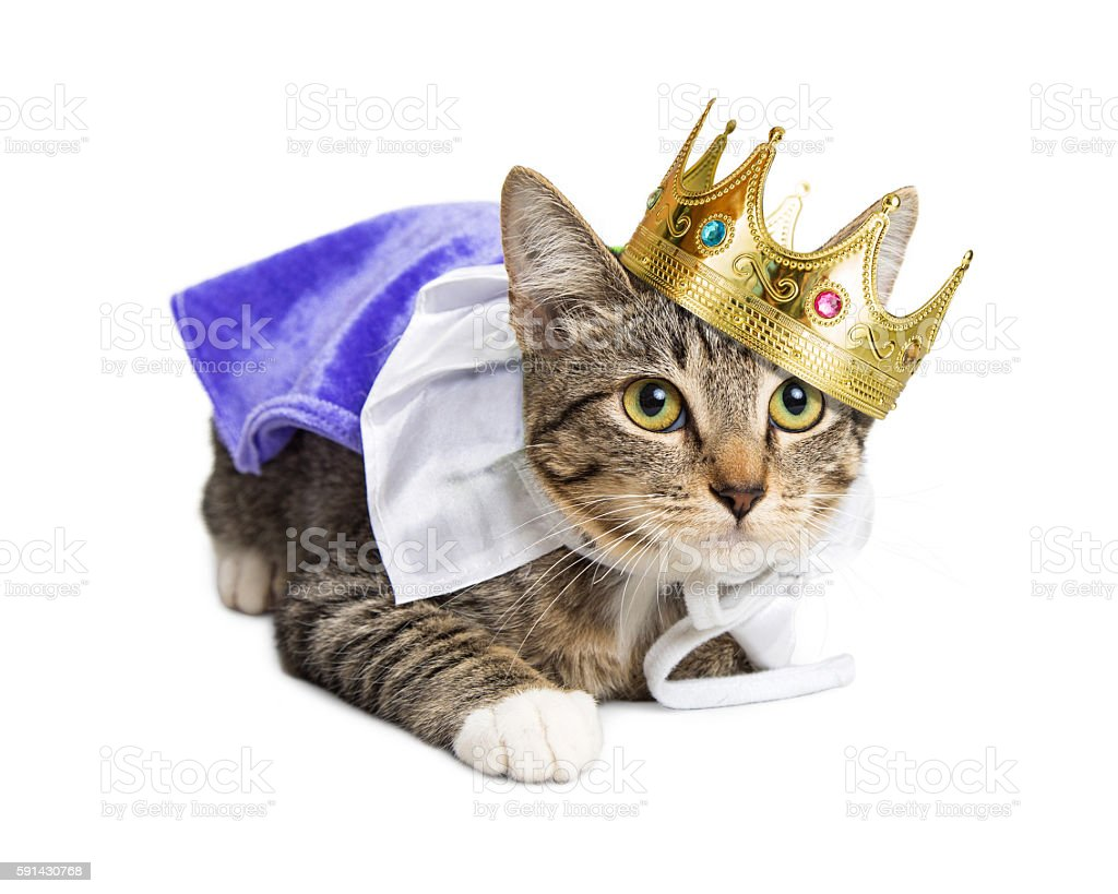 Kitten wearing prince costume stock photo
