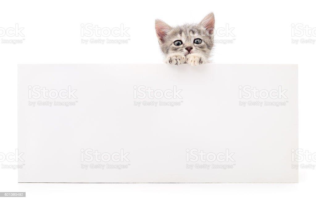 Kitten with blank. stock photo
