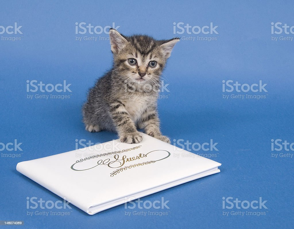 Kitten with guest book royalty-free stock photo