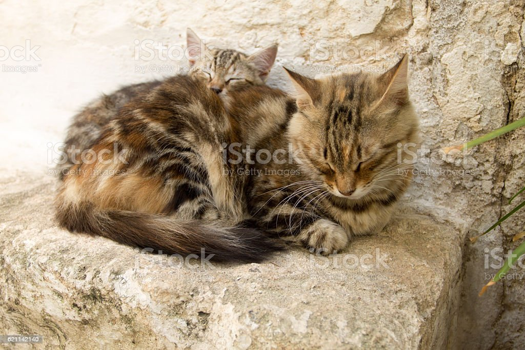 Kitten with mum sleeping on the ground stock photo
