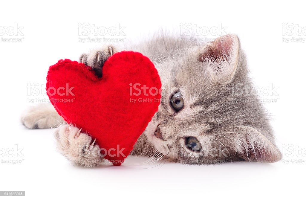 Kitten with red heart. stock photo