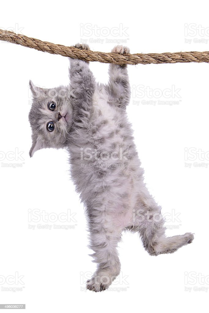 kitten with rope stock photo