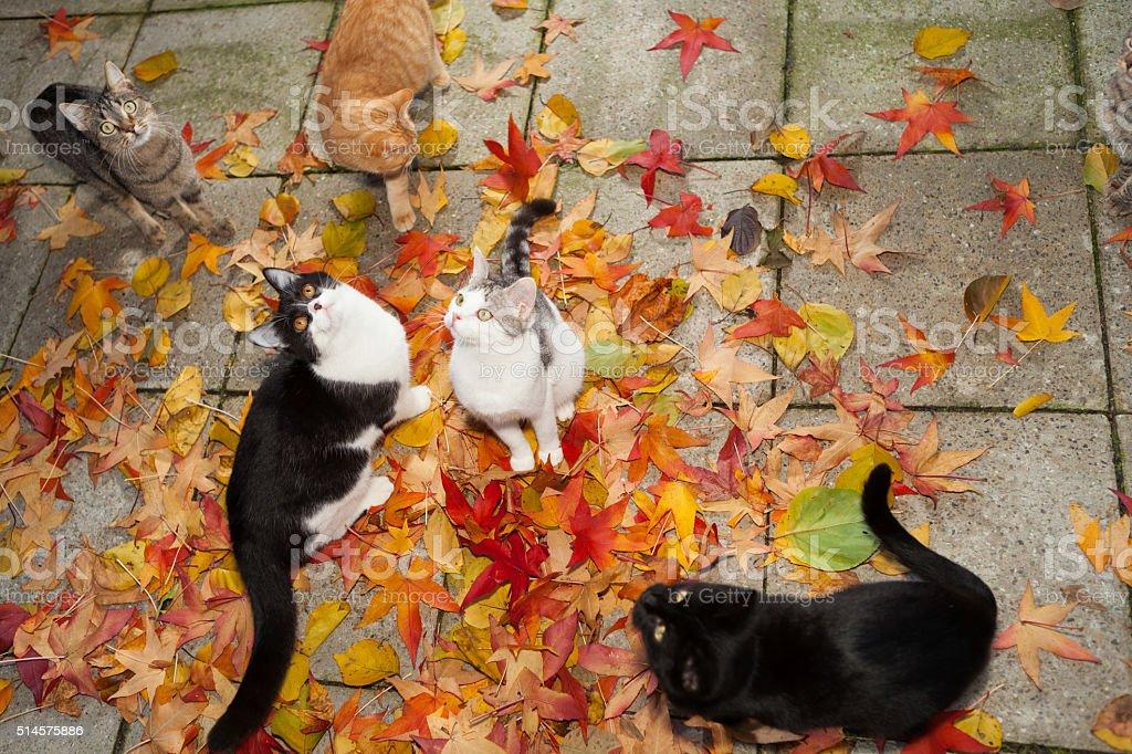 kitten within coloful autumn leaves stock photo