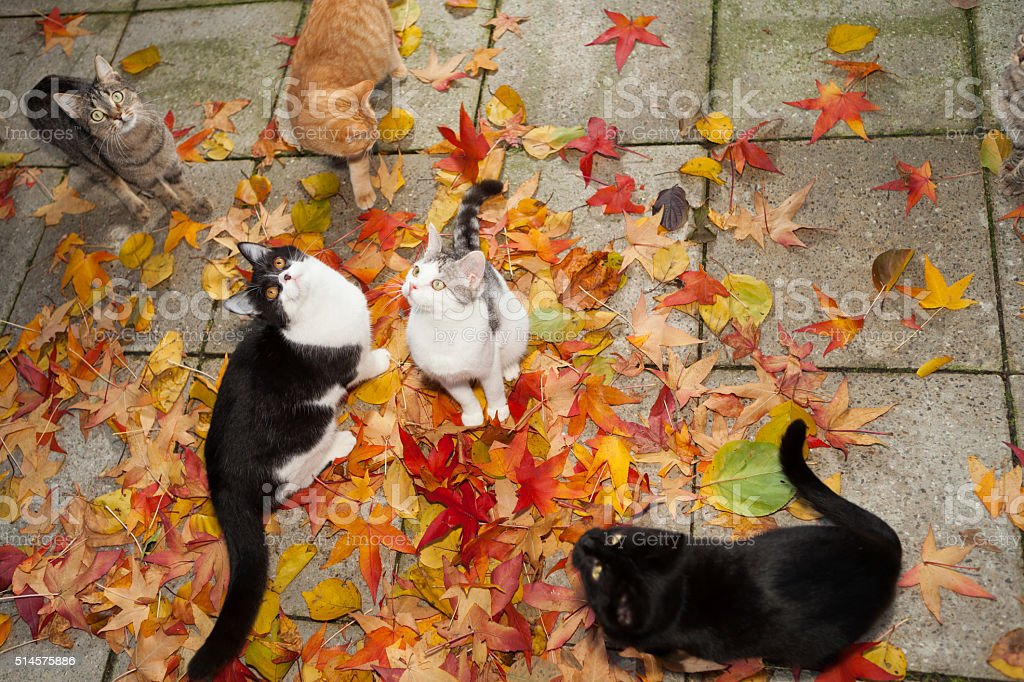 kitten within coloful autumn leaves stock photo