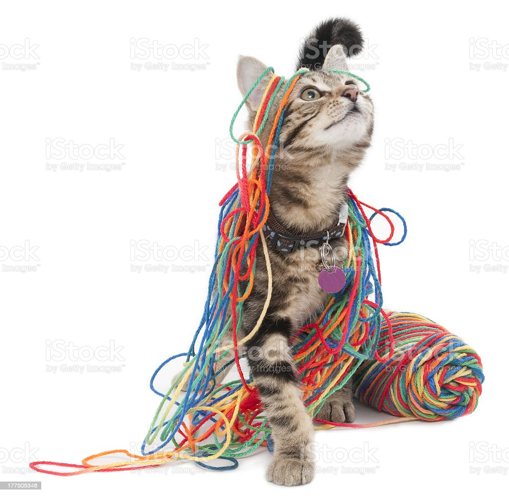 Kitten Wrapped in Colorful Yarn stock photo