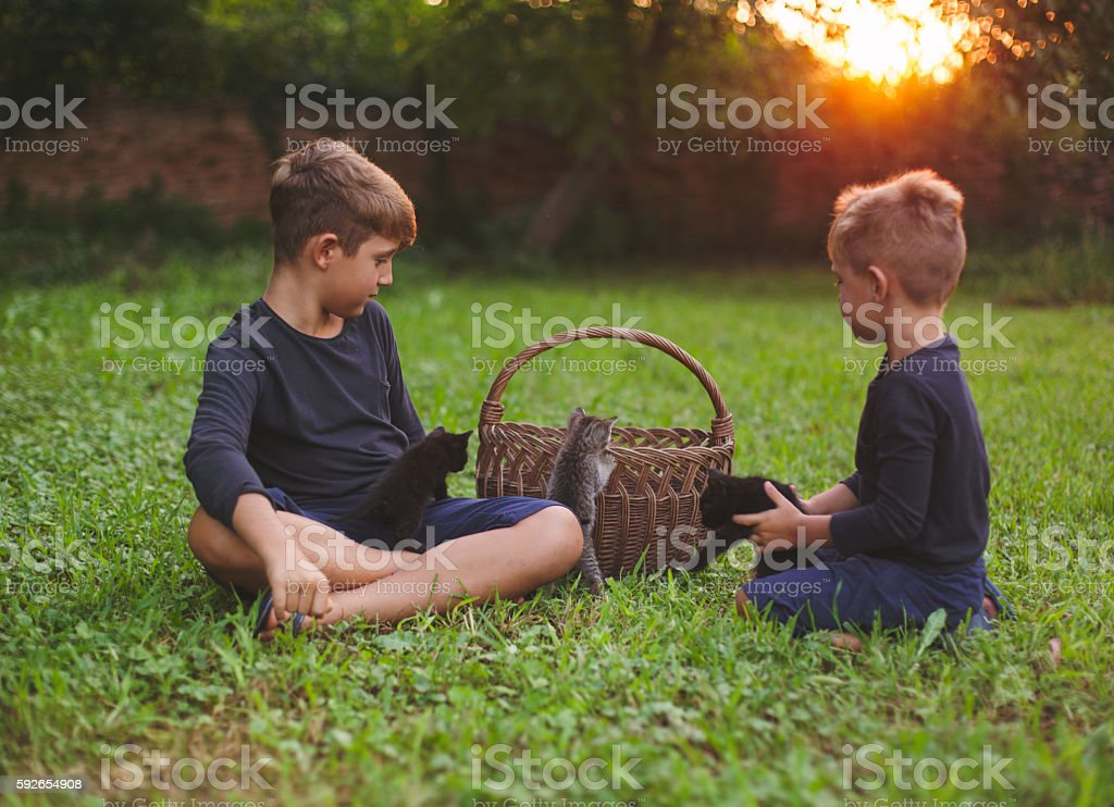 Kittens and boys stock photo