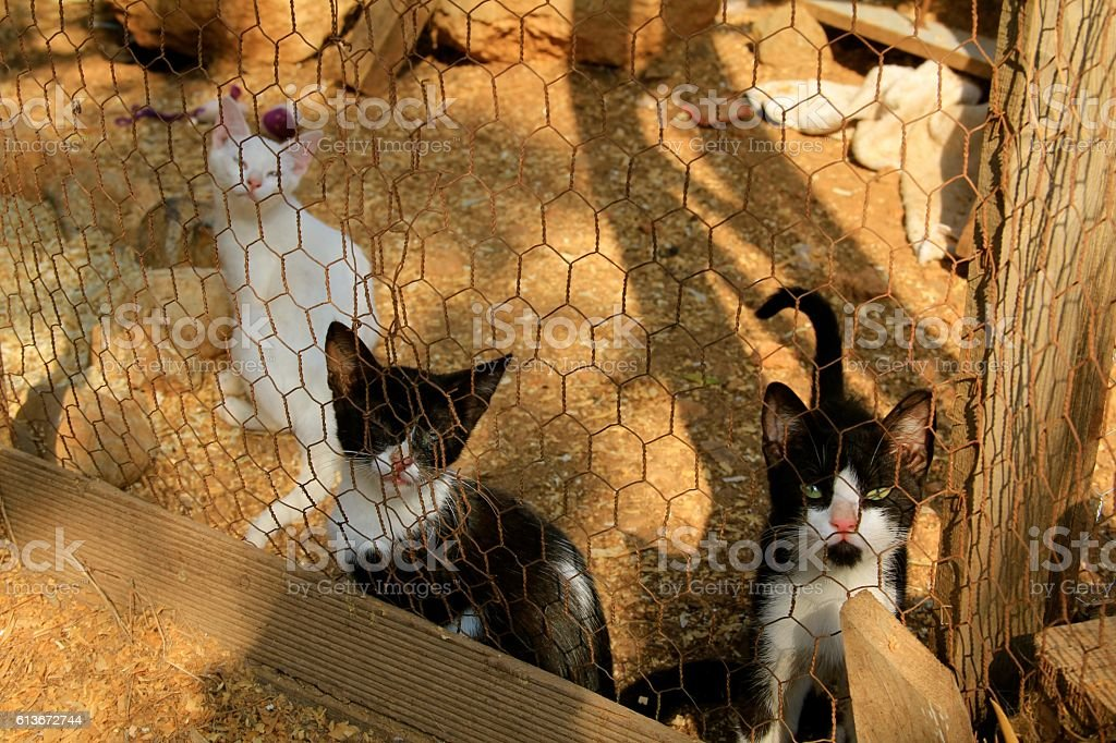 Kittens Caged stock photo