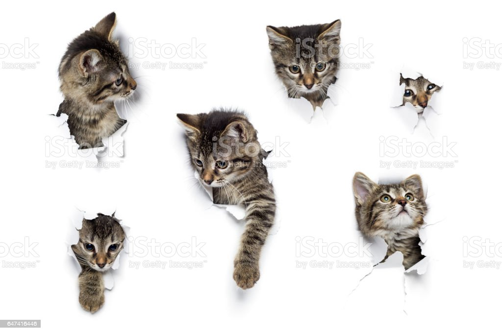 Kittens in holes stock photo