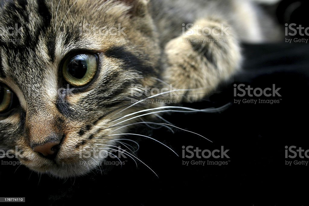 Kittens Look royalty-free stock photo