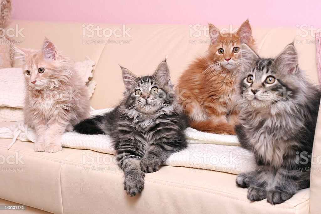 Kittens on a couch stock photo