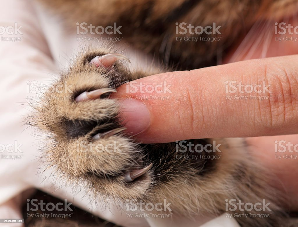 Kitten's paw stock photo