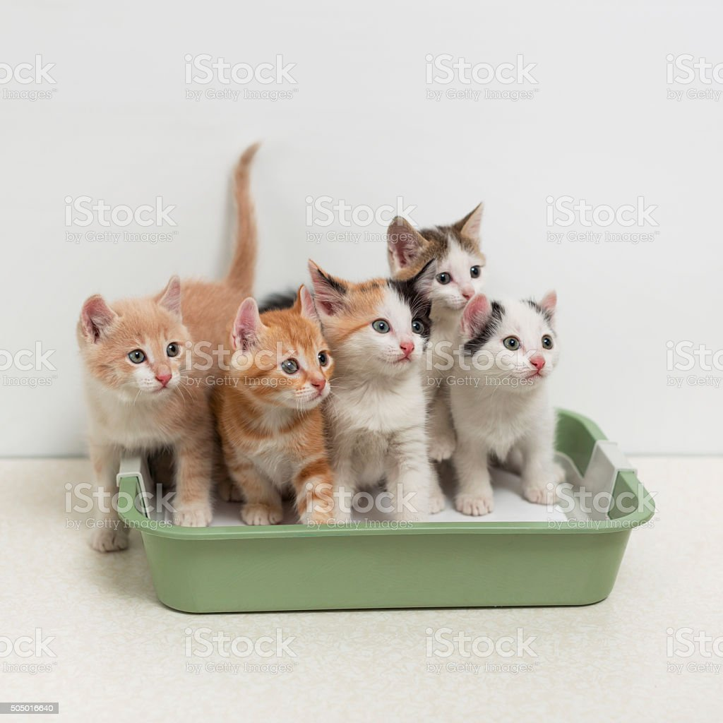 Kittens sitting in cat toilet stock photo