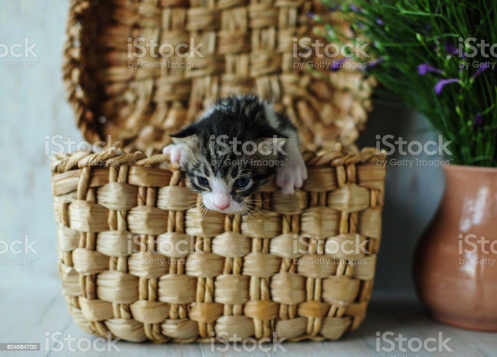Kittens. Small, lovely creatures. stock photo