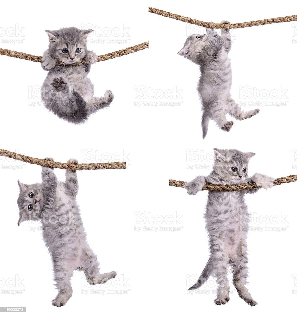kittens with rope stock photo