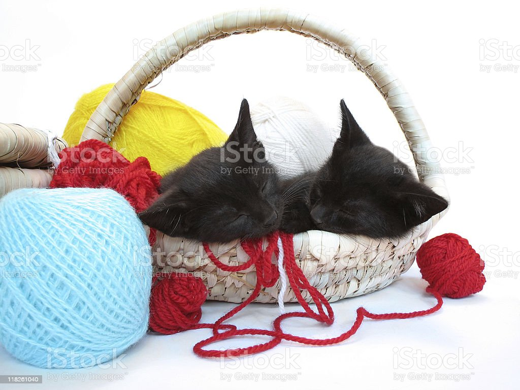 kitties sleeping in the basket with yarn royalty-free stock photo