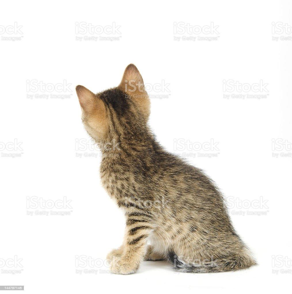 Kitting looking around corner royalty-free stock photo