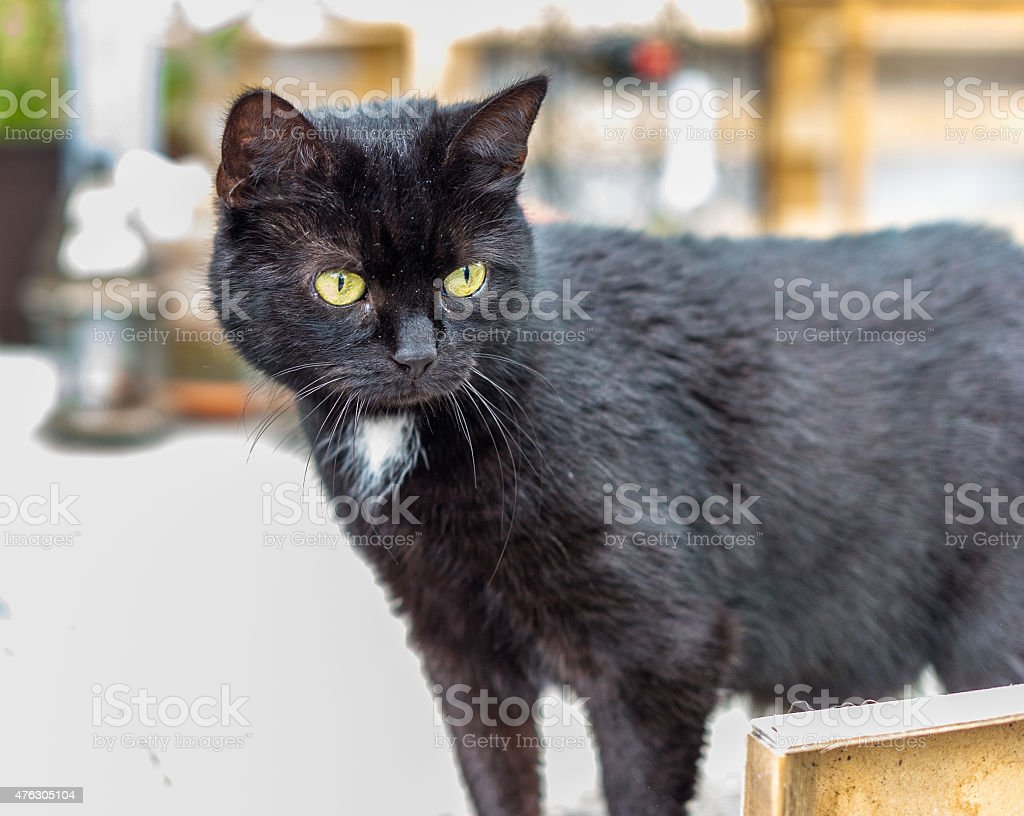 Kitty Cat stock photo