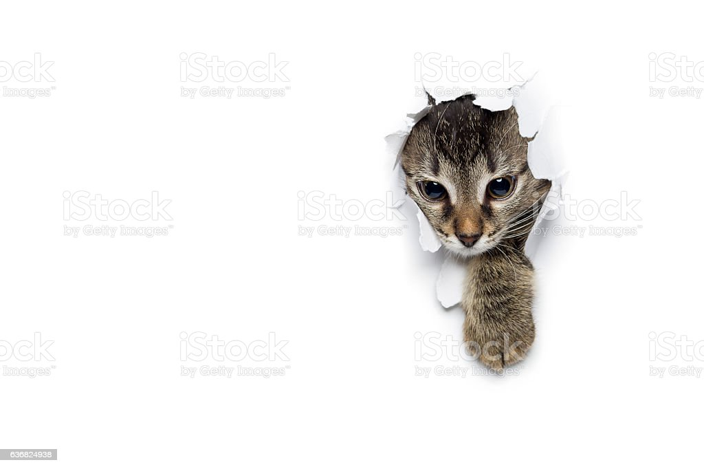 Kitty in hole of paper stock photo
