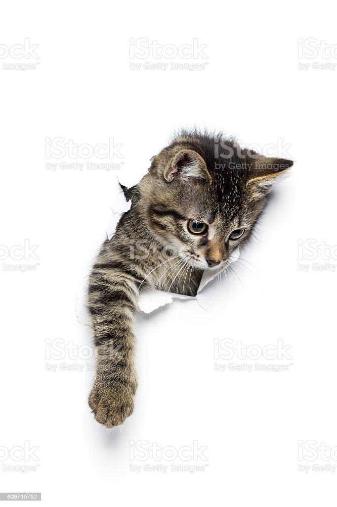 Kitty in hole stock photo