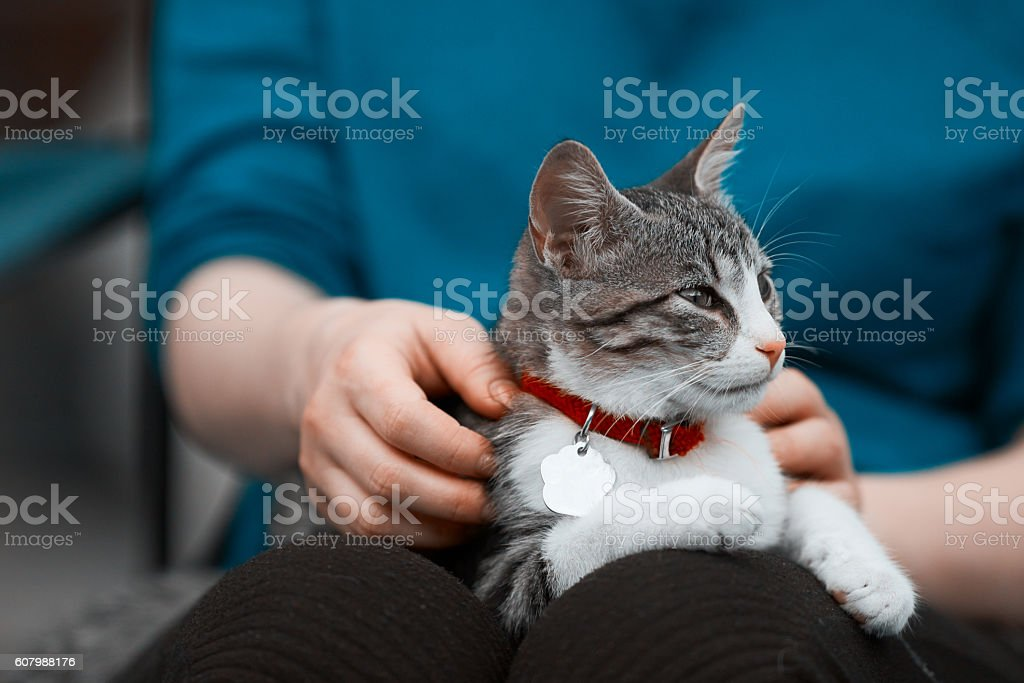 kitty in woman hands stock photo