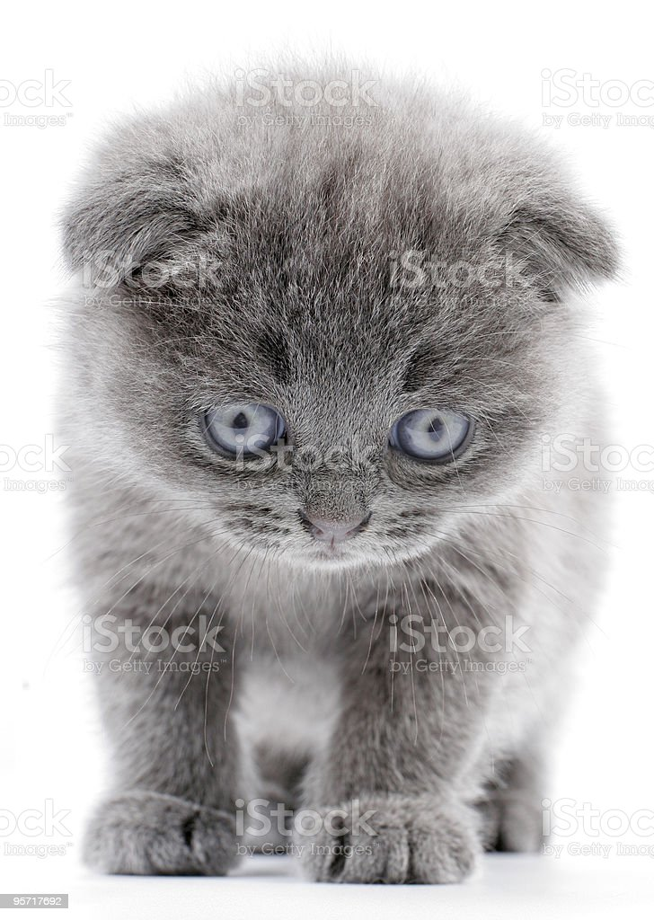 kitty look to down royalty-free stock photo