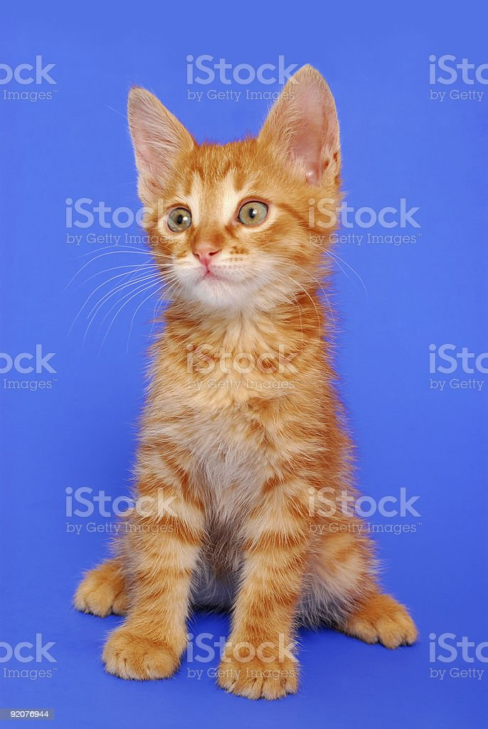 Kitty on yellow background stock photo