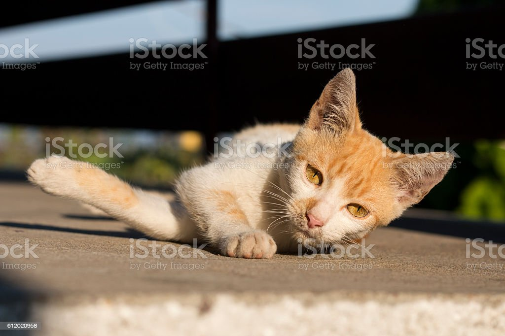 Kitty rolling on the ground stock photo istock