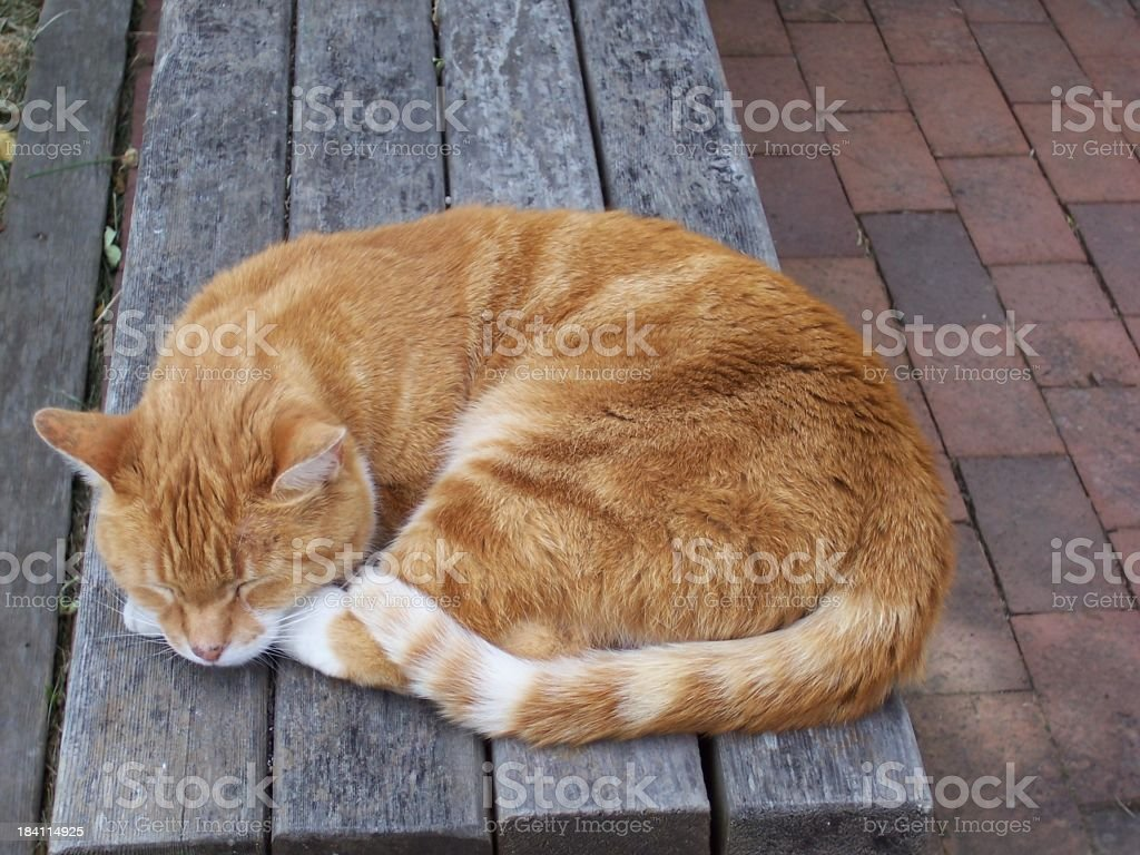 Kitty sleeping on bench royalty-free stock photo