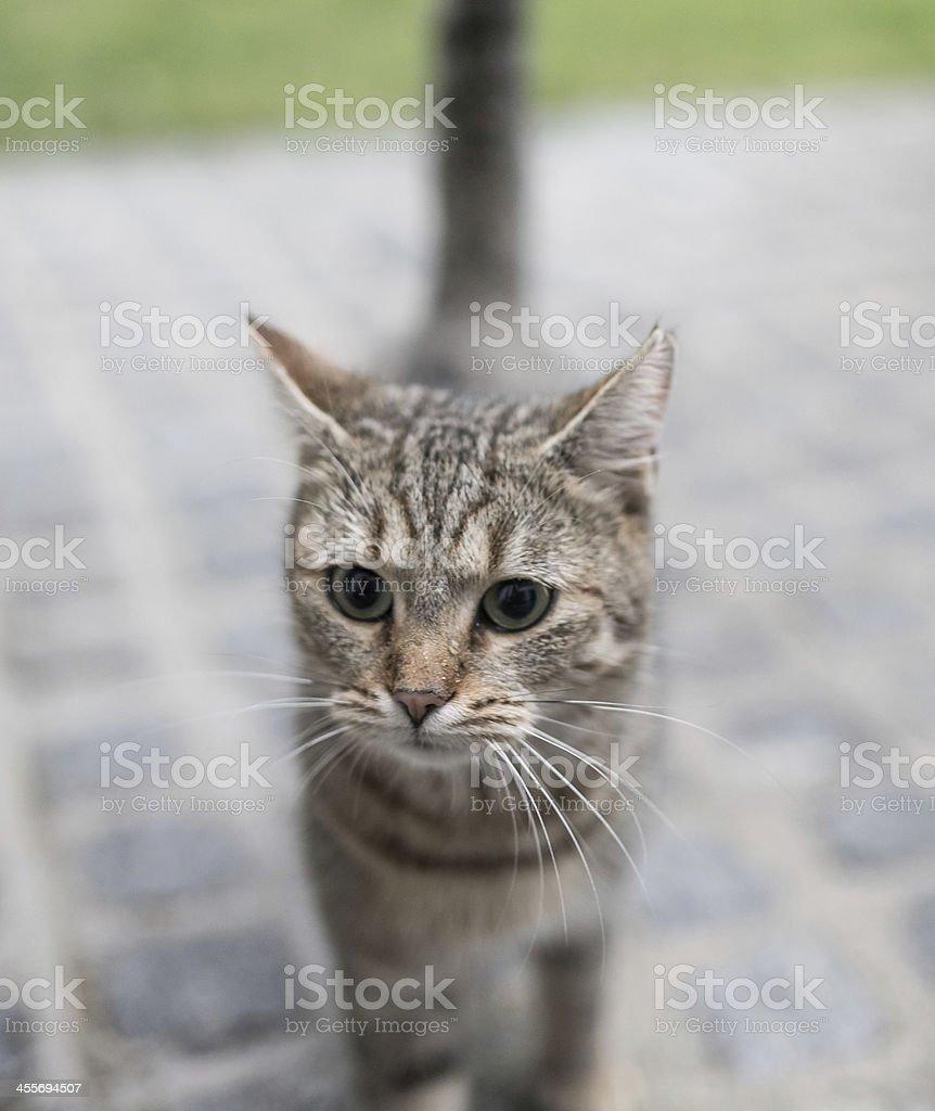 Kitty the cat royalty-free stock photo