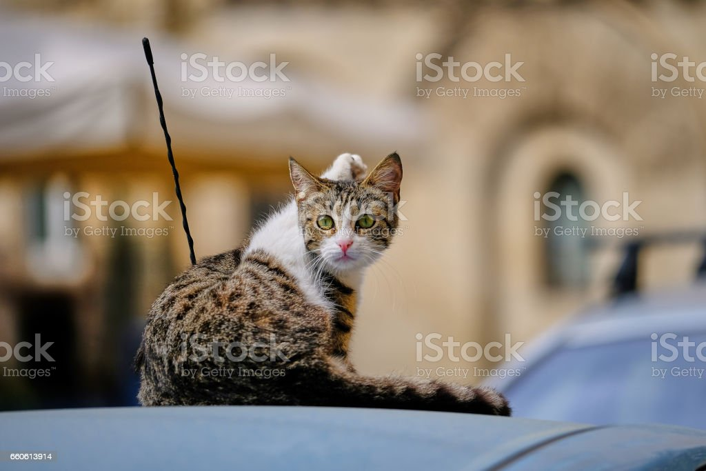 Kitty's cleaning above a car stock photo