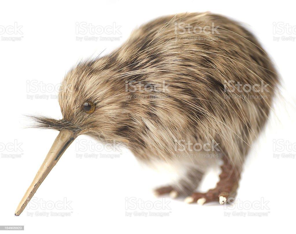kiwi bird stock photo