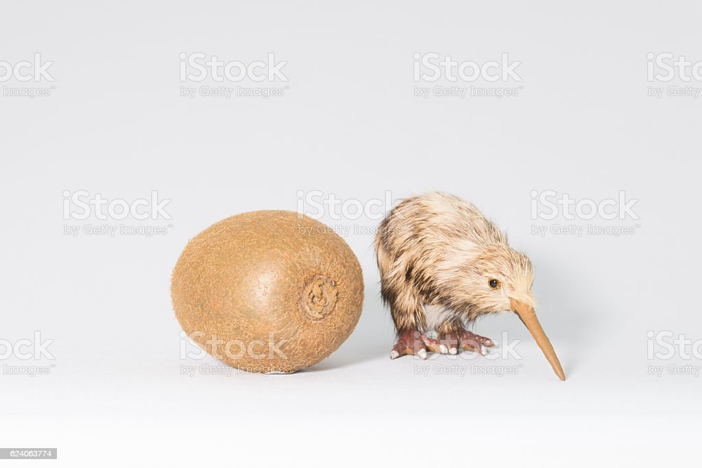 Kiwifruit and kiwi stock photo