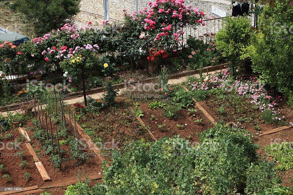 Kleingarten mit Beeten und Gem?seanbau stock photo
