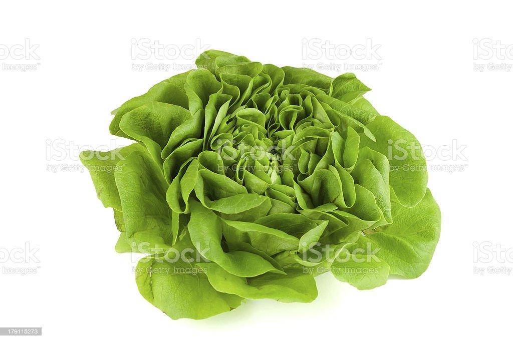 knackiger salatkopf stock photo