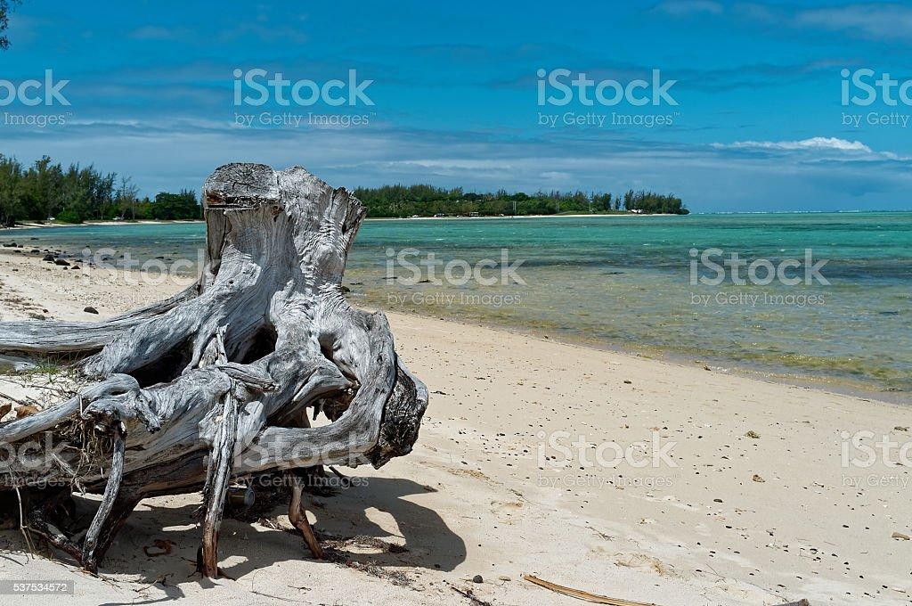 knaggy stock photo