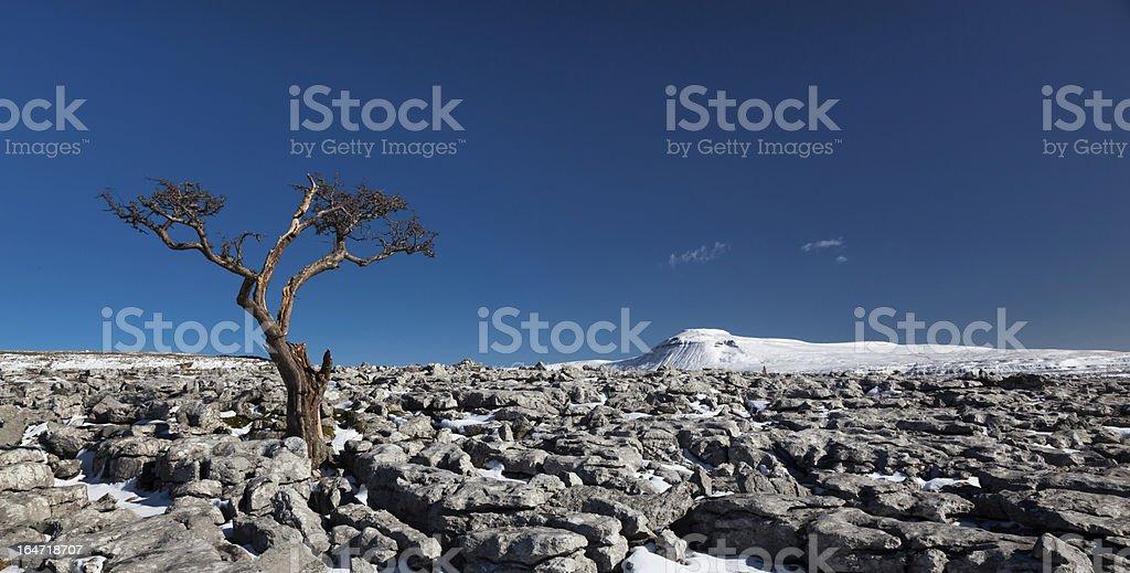 Knarled tree looking across to Ingleborough royalty-free stock photo